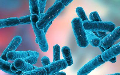 Como funcionam os probióticos?